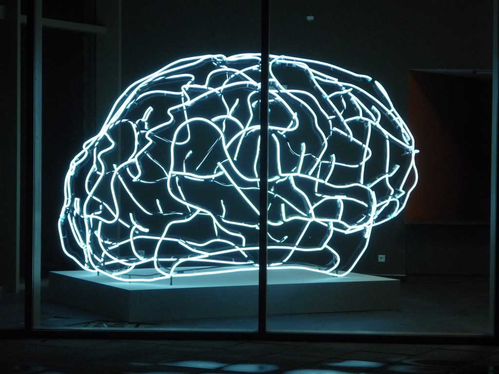 cerveau 61